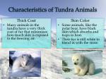 characteristics of tundra animals