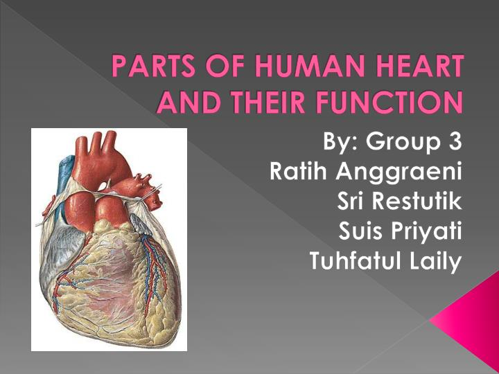 Ppt parts of human heart and their function powerpoint parts of human heart and their function ccuart Choice Image