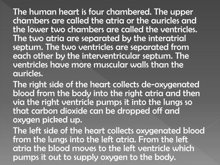 Ppt parts of human heart and their function powerpoint the human heart is four chambered the upper chambers are called ccuart Gallery