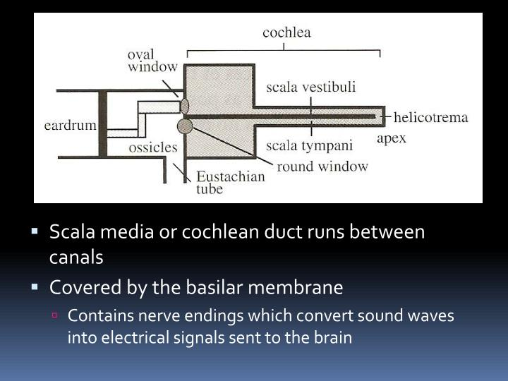 Figure I1.2, Schematic Diagram of the Ear