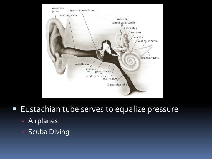 Eustachian tube serves to equalize pressure