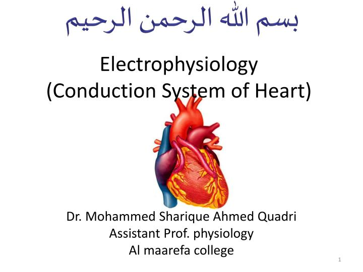 PPT - Electrophysiology ( Conduction System of Heart) PowerPoint ...