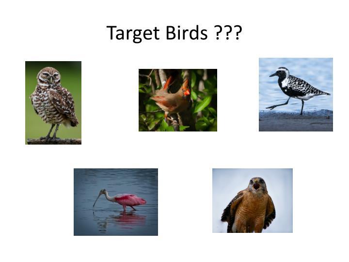 Target birds