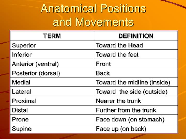 Ppt Anatomical Positions And Movements Powerpoint Presentation
