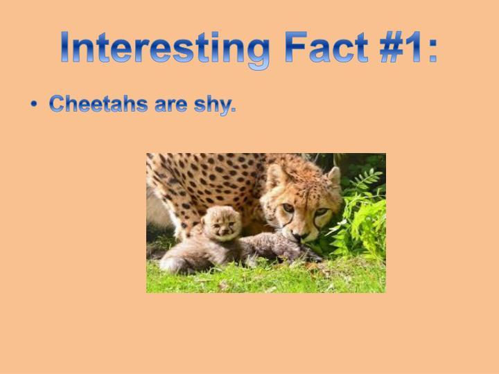 Interesting Fact #1: