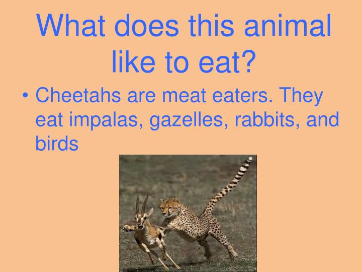 What does this animal like to eat