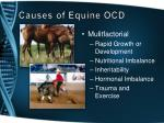causes of equine ocd