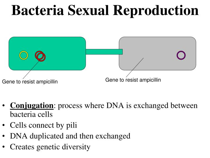 Bacteria Sexual Reproduction