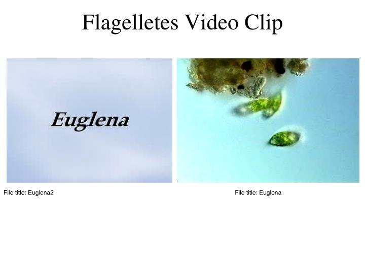 Flagelletes Video Clip