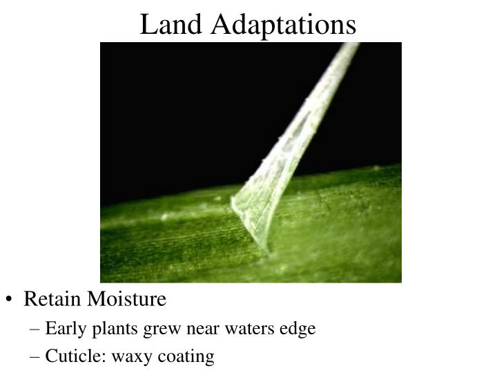 Land Adaptations