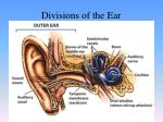 divisions of the ear1