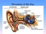 divisions of the ear2