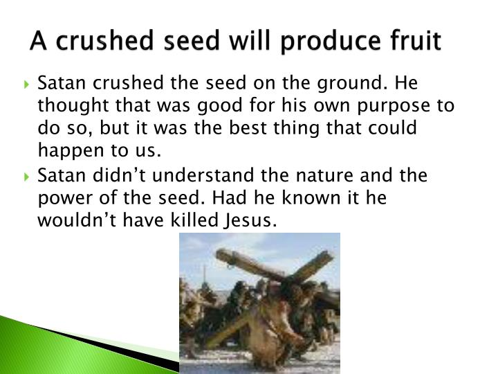 A crushed seed will produce fruit