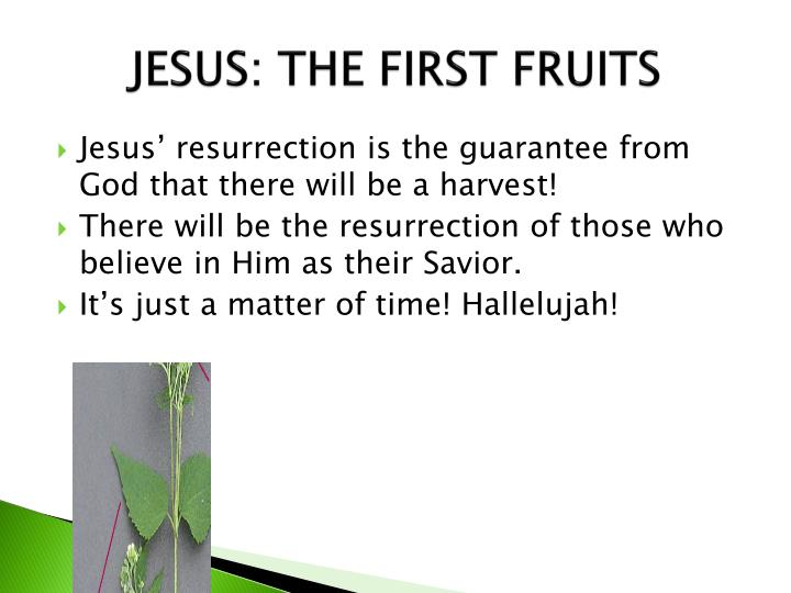 JESUS: THE FIRST FRUITS