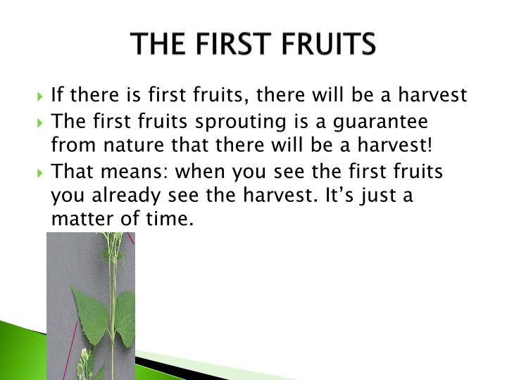 THE FIRST FRUITS