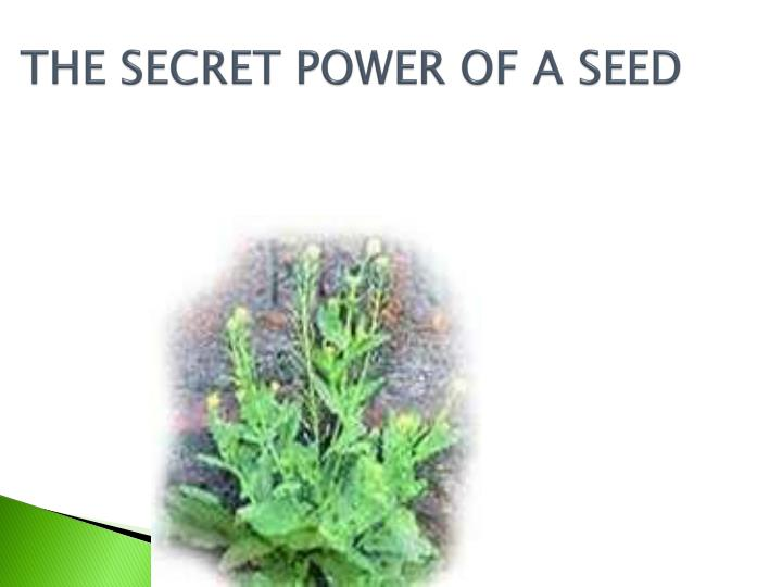 THE SECRET POWER OF A SEED
