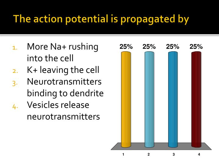 The action potential is propagated by