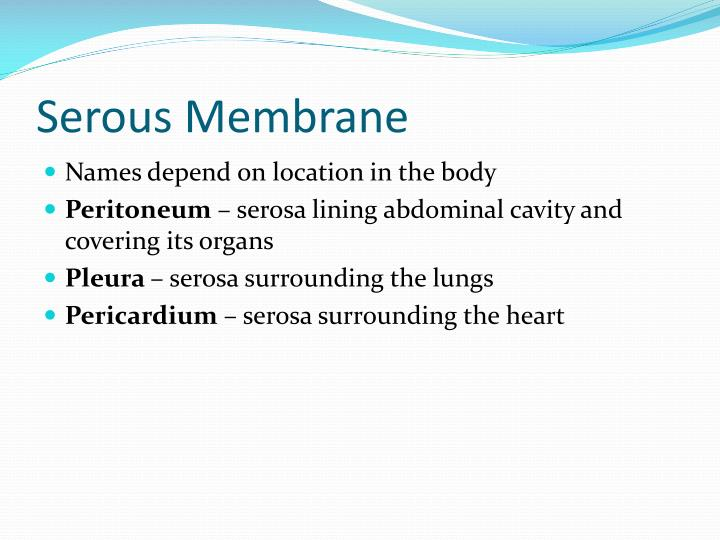 Serous Membrane