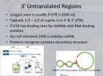 3 untranslated regions