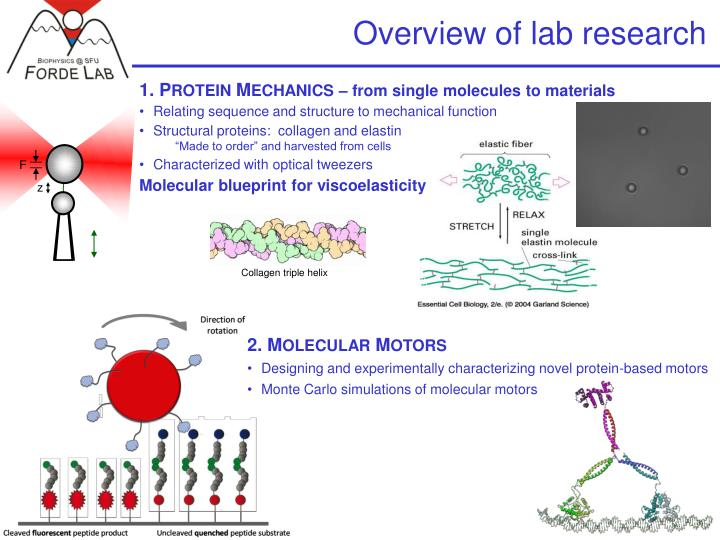 overview of lab research n.