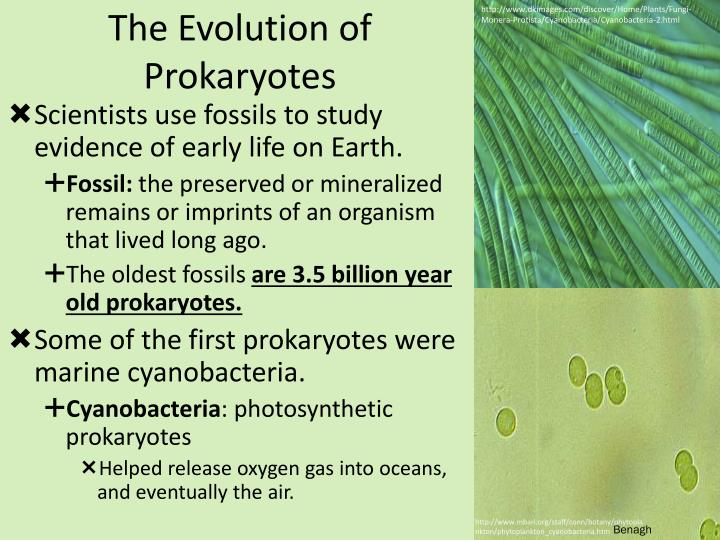 the evolution of prokaryotes n.