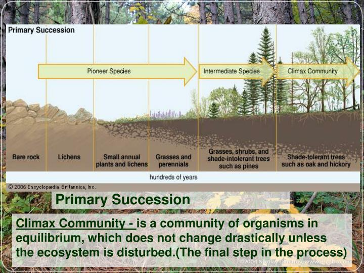 Ppt changes in ecosystems ecological succession powerpoint primary succession publicscrutiny Images