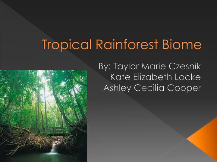 rainforest essay introduction Tropical rainforest essay tropical rainforest essay 5226 words oct 2nd,  sarawak introduction as we all know that deforestation sharply accelerated in these .