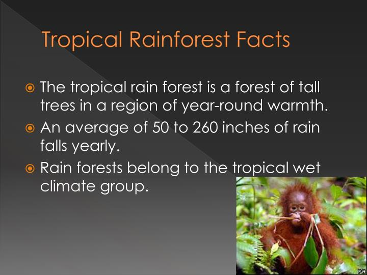 rainforest biome information