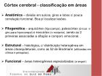 c rtex cerebral classifica o em reas