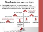 classifica o das reas corticais