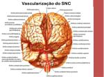 vasculariza o do snc2