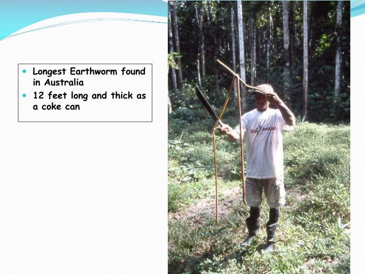 Longest Earthworm found in Australia