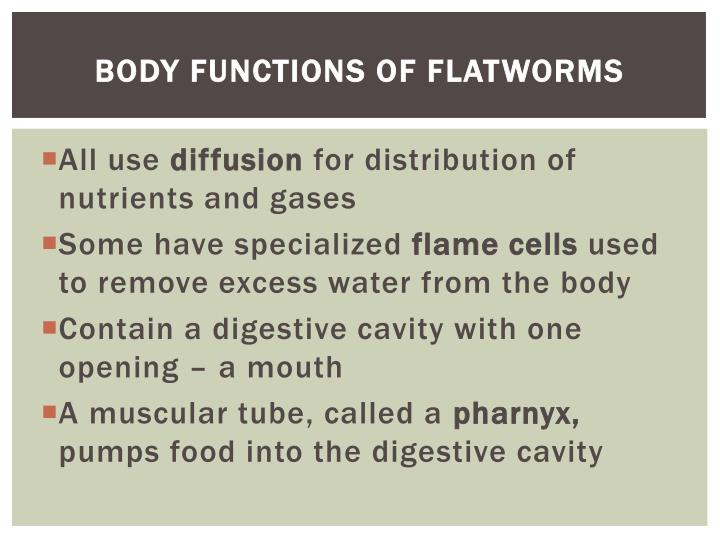 Body functions of flatworms