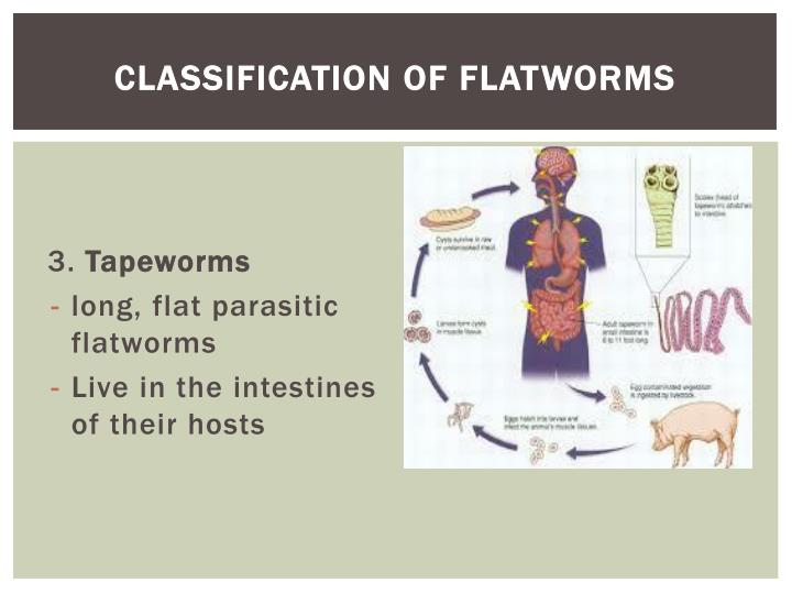 Classification of Flatworms
