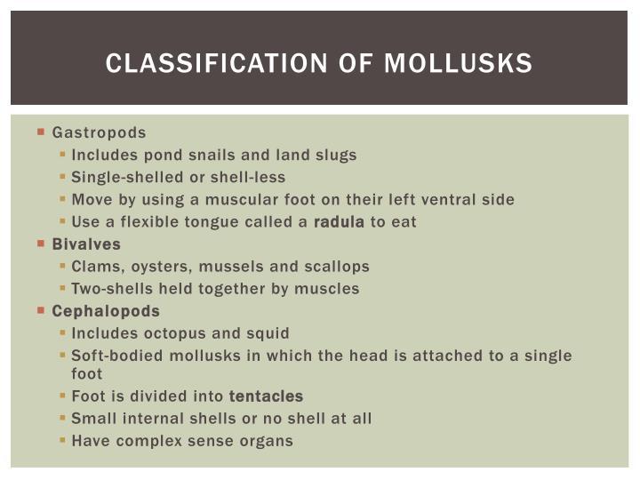 Classification of mollusks