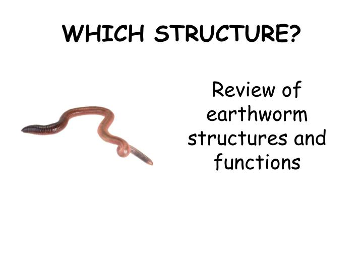 PPT - WHICH STRUCTURE? PowerPoint Presentation - ID:2360820