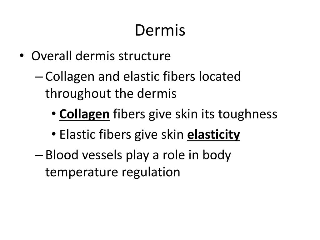 PPT - Skin and Body Membranes PowerPoint Presentation - ID:2361156