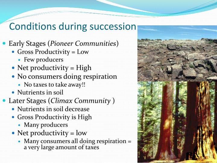 Conditions during succession