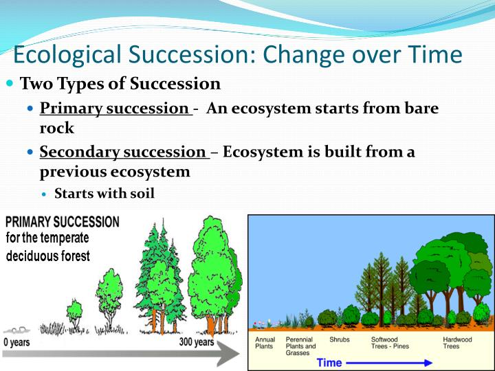 Ecological Succession: Change over Time