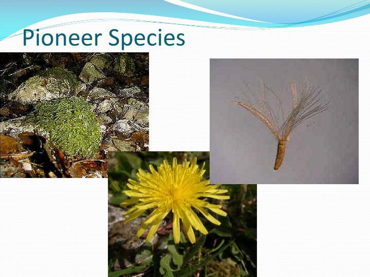 Pioneer Species