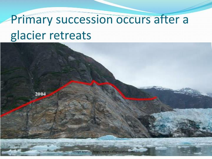 Primary succession occurs after a glacier retreats