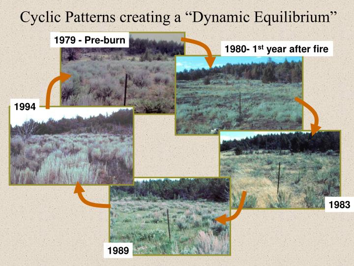 "Cyclic Patterns creating a ""Dynamic Equilibrium"""