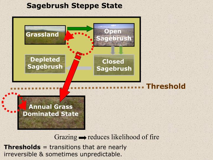 Sagebrush Steppe State