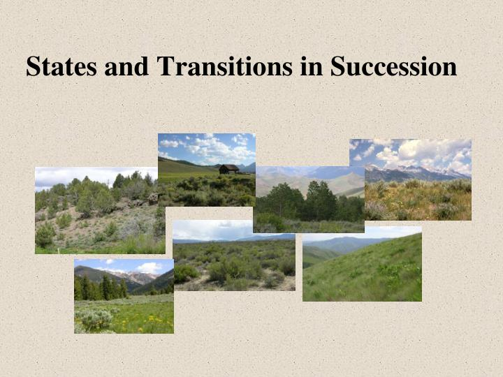 States and transitions in succession