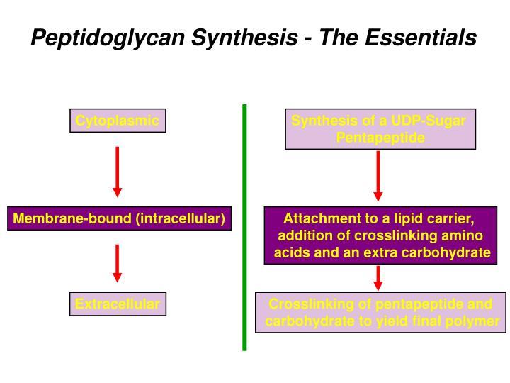 Cytoplasmic