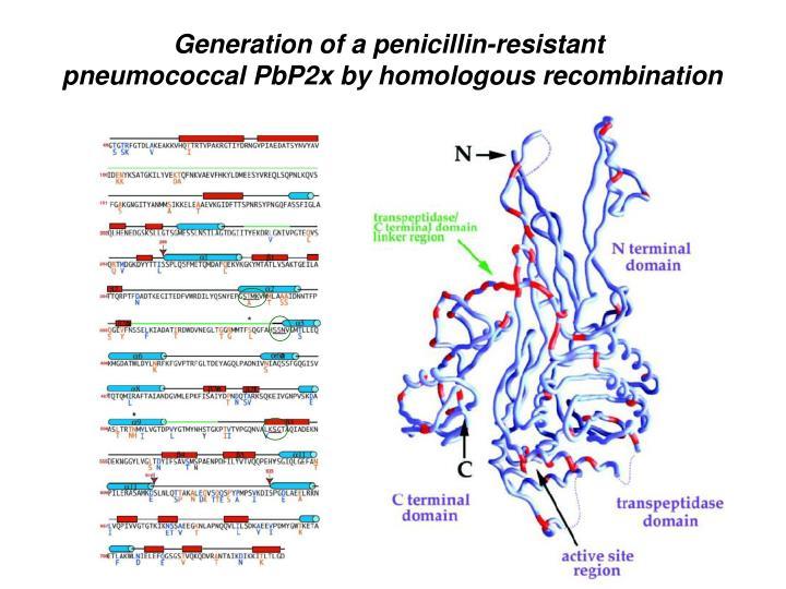 Generation of a penicillin-resistant