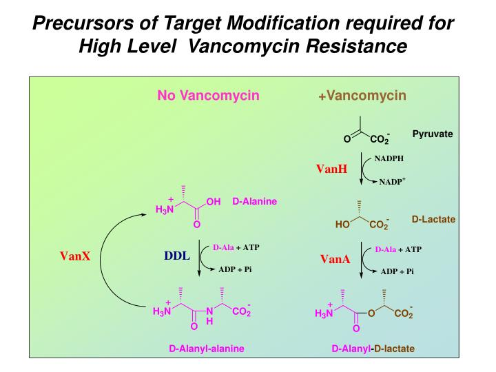 Precursors of Target Modification required for
