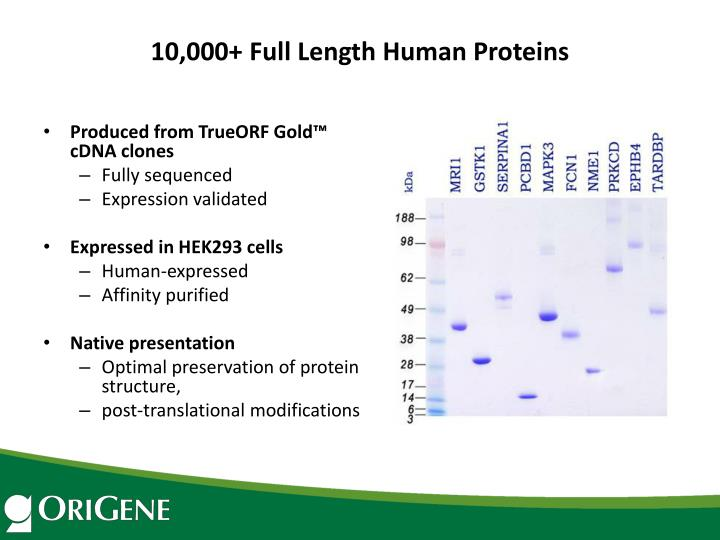 10,000+ Full Length Human Proteins