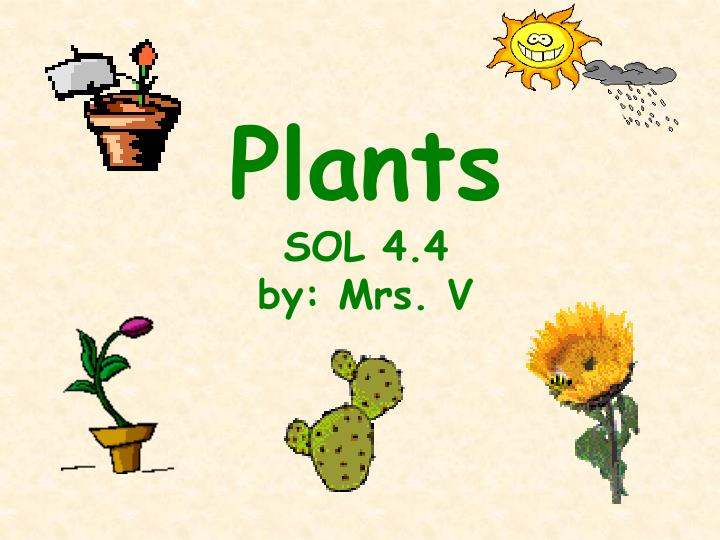 plants sol 4 4 by mrs v n.