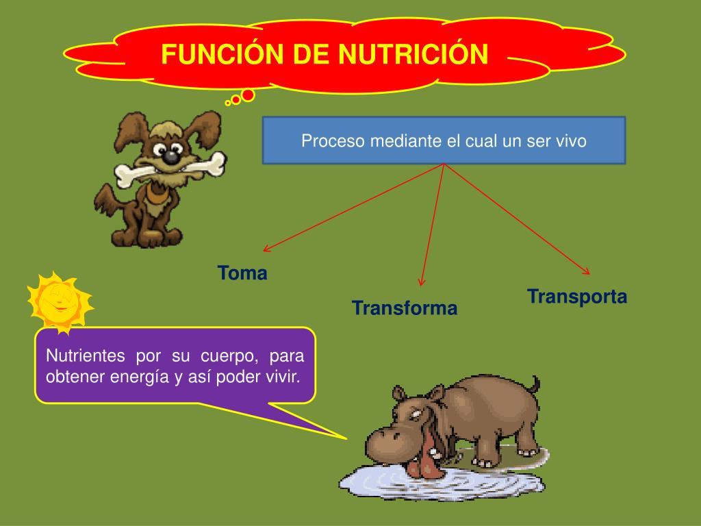 PPT - FUNCIONES VITALES DE LOS SERES VIVOS PowerPoint..